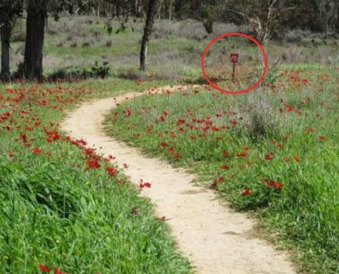 סינגל בארי מסלול אדום